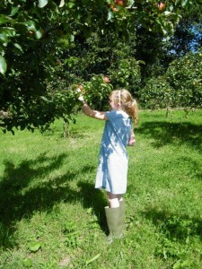 orchard_apple picking