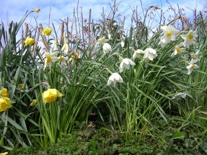 48-on-the-verges