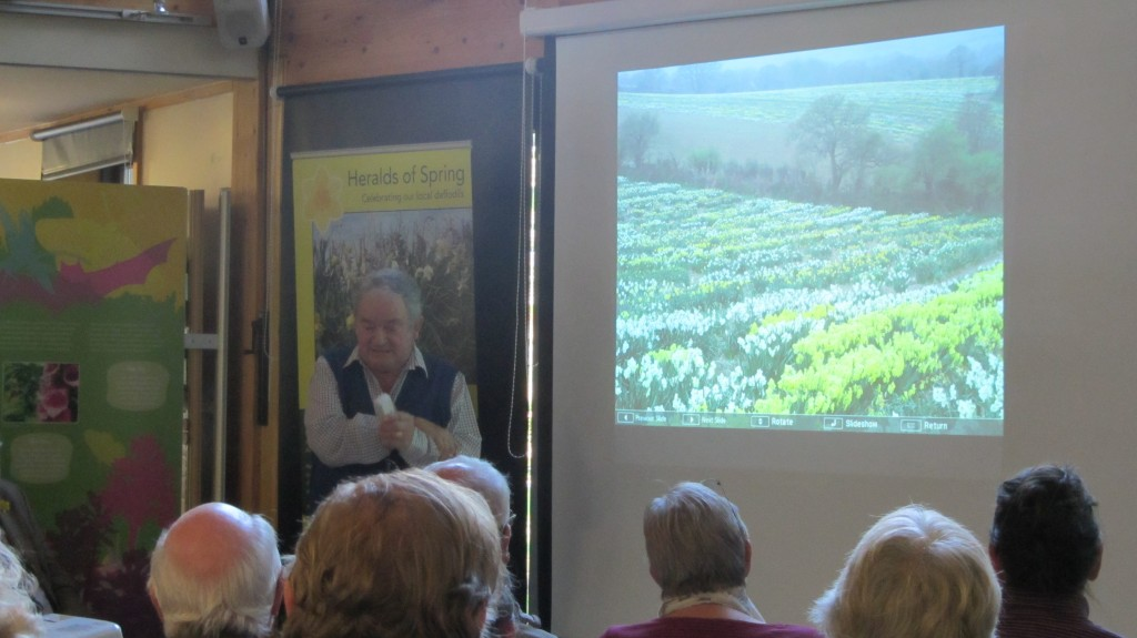 Ron Scamp, Cornish Daffodil Grower & Breeder