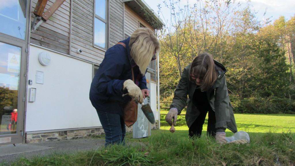 planting bulbs in the grounds of the Tamar Valley Centre