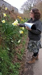 RF hedge survey