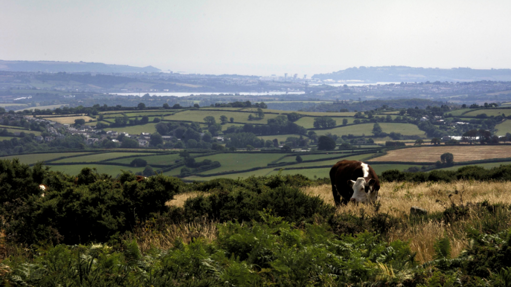 the landscape of the Tamar Valley Area of Outstanding Natural Beauty