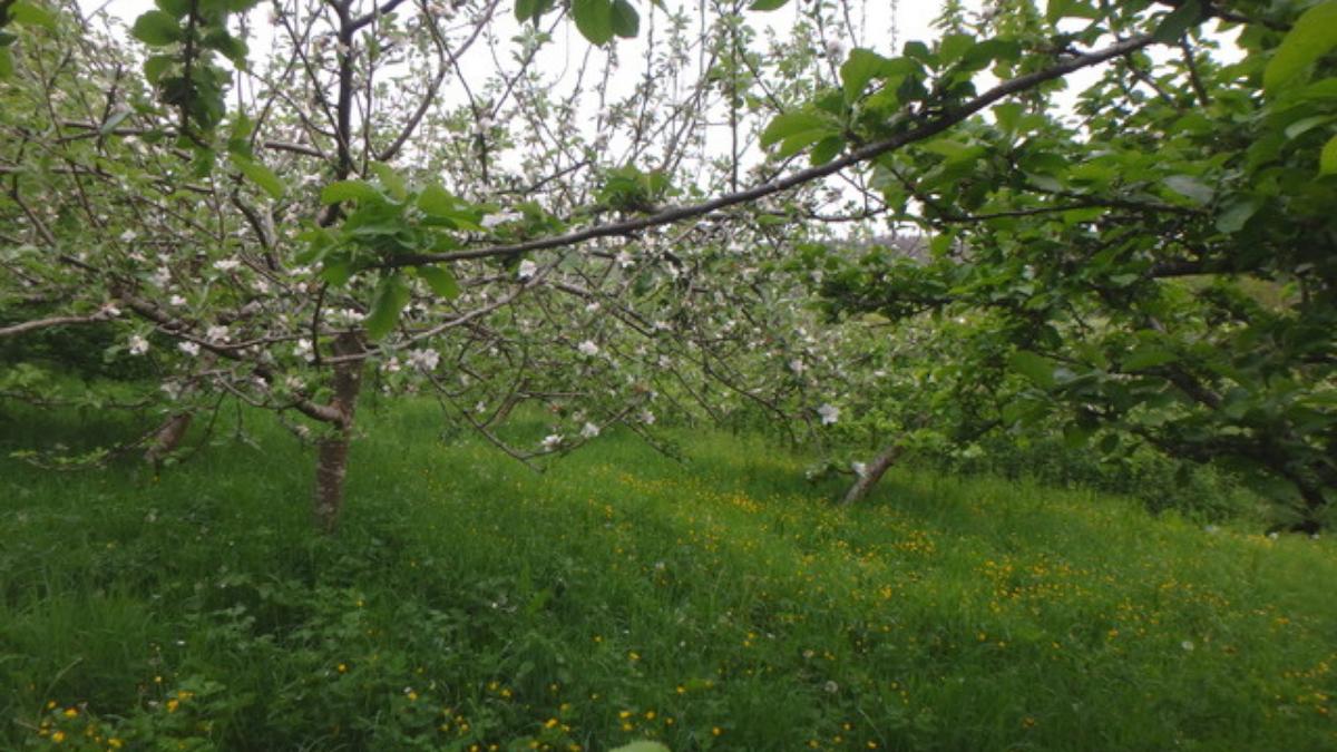 Buckland Monachorum Community Orchard