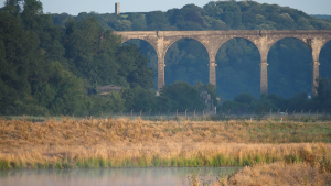 Calstock Viaduct with Prospect Tower in the background